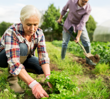 6 Tips for Gardening without Back Pain